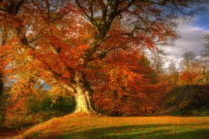Autumn in Belvoir Forest by Gerard1972