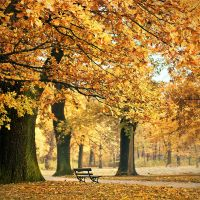 autumn 2010 by rattattart