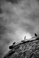 .theBirds by Snapperz