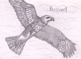 Bussard by Ka-Kind