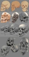 Drawing practise: The human skull by IgnazioDelMar