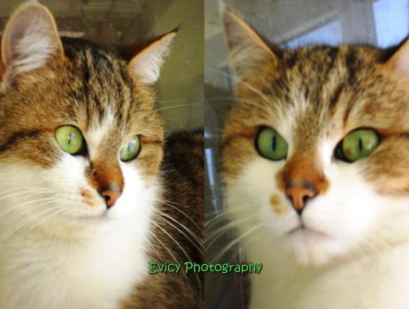 ...Green eyes... by Evicy