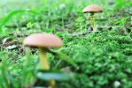 Mushrooms 3 by maskedsilhouette