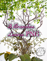 3 Branches Leaves TRANSPARENT!!!! PNG by Maryneim