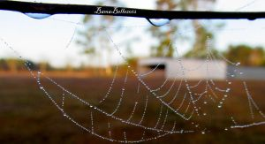 Morning Web by BamaBelle2012