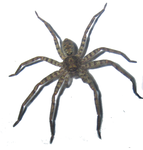 Spider Stock png by RavenMaddArtwork