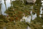 Fishes Lake Stock by DigitalDreams-Art