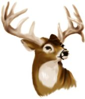 Whitetail bust by creepygoth666