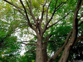 Tree Side View by Anj3lla