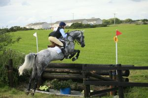 Cross country 18 by Kennelwood-Stock