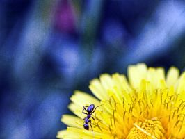 Pollinating by CiacoAgain