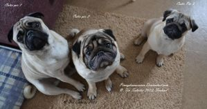 All my Cutie Pie pug's by pimeydenmorsian