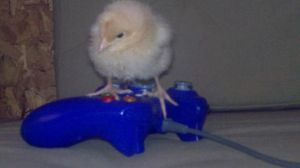 Mary the Rooster plays Xbox by SkitSkittle