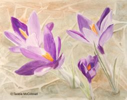 Purple Crocuses Painting by teddiem