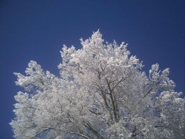 Snowy Tree by pictures-in-my-head