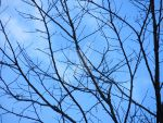 Branches with Blue Sky by Charlief43