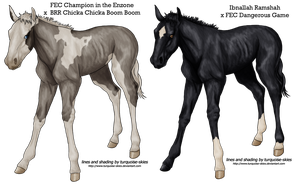 Foals For Others by FallbrookeEC