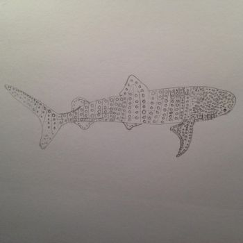 Whale Shark Sketch #1 by TheMysticFrog