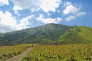 Teletubbies Hill  at Mountain Bromo by Ngoeg
