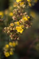 Yellow Cluster by lightzone