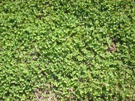 Clover Stock by Noxtu-Stock