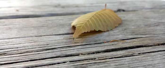 Stray Leaf On the Planks by SilverWillowfly