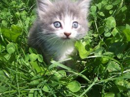 Kitten in the Grass by LunaPicture
