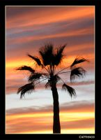 Palm Tree by caithness155
