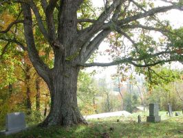Large Tree Stock by HauntingVisionsStock