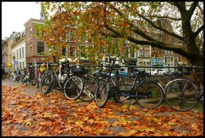 Bikes and leaves in Utrecht by Esperimenti