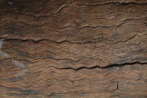 Dry wood texture 1 by BlokkStox