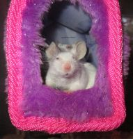 Balimos in her new pink and purple house by MaguschildCloud
