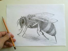 Bee by drian21