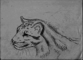 Clouded Leopard sketch by Phinia-Black