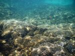 Panama Canal underwater stock 010 by FairieGoodMother