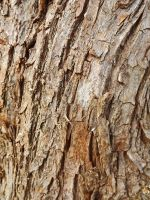 Branch Texture 1 by SpellpearlArts