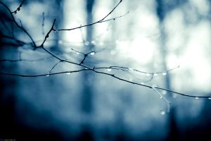 rain drops in forest by iamtriet