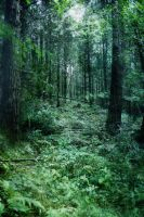 fantasy woodland bg 2 by joannastar-stock