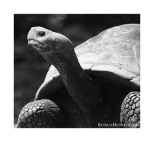 Snooty the Turtle by kingkool6