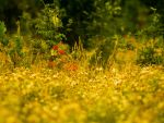 Meadow by horus-eire