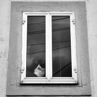 cat in window by txay