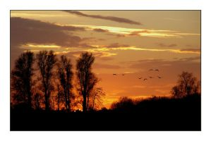 Sunset with geese by jchanders