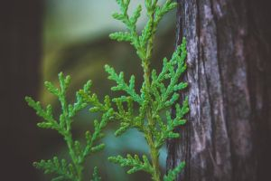 Pine Details by ItBazooka