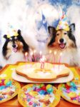 Happy Bday Lassie! by hermio