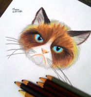 Grumpy cat by ronronando