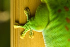 a little green geckos foot by Moepling
