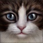 Brown Tabby and White Cat Face by Wynnyelle