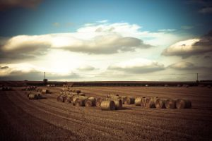 Bales by city17