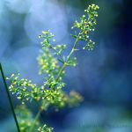 blue and yellowish green by Lisa-Schneider