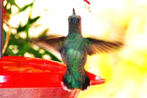 Humming Bird by angelwith1morea15